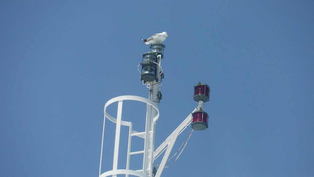Navigation & signal lights
